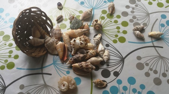 Collection of brown, mottled shells